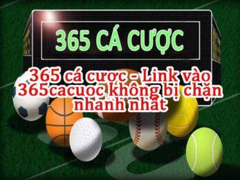 link vào 365 cá cược - 365cacuoc - 365ca cuoc - 365cacuoc.com 365cacuoc.com.vn