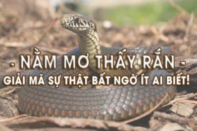 Nằm mơ thấy rắn cắn đánh con gì