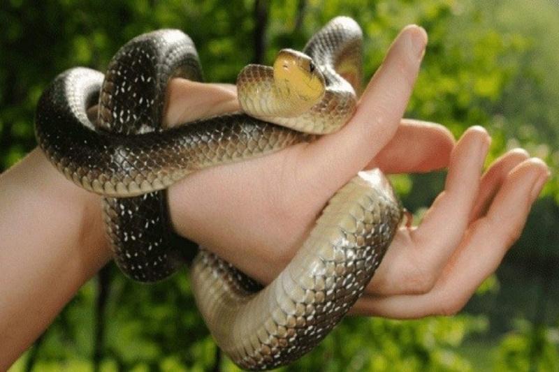 Chiêm bao thấy người yêu cũ bị rắn cắn đánh liên tay cặp đề 55 - 61