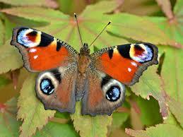 Mơ thấy con bướm đánh con gì?